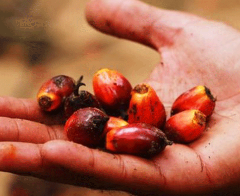 ||Brill Joins Sustainable Palm Oil Network